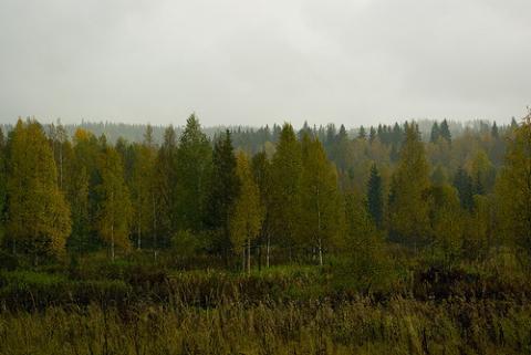 finlandia-bosque.jpg