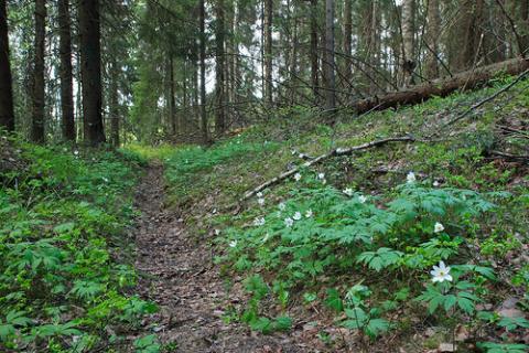 bosque-finlandia.jpg