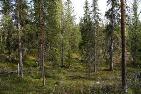 finlandia-actividades.jpg