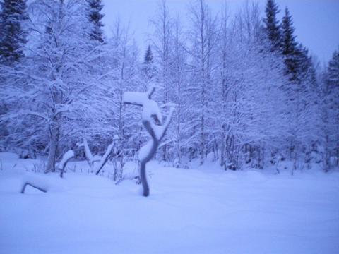 laponia-finlandia.jpg
