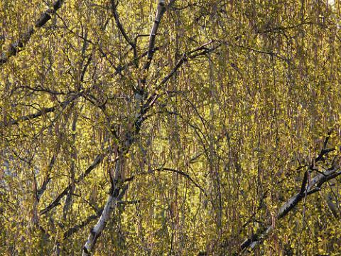 finlandia-primavera.jpg