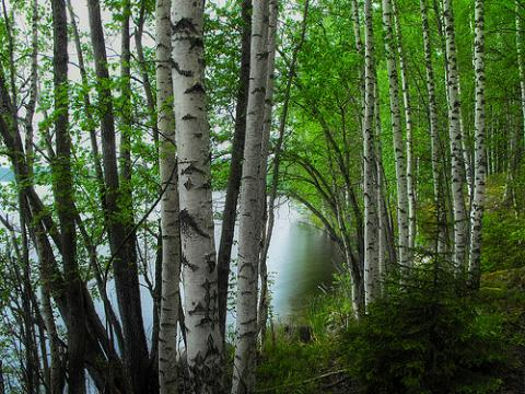 finlandia-naturaleza.jpg
