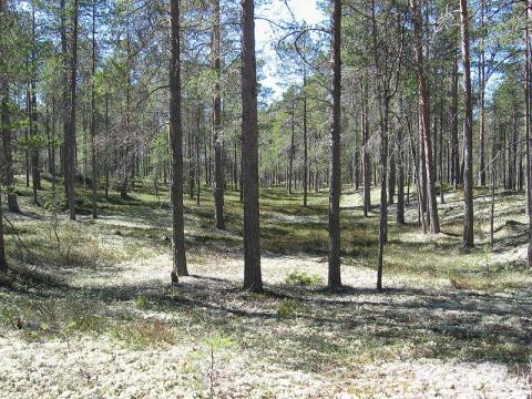 bosque-fines.jpg