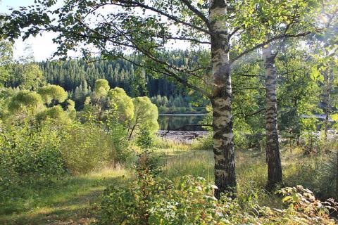 paisaje-finlandes.JPG